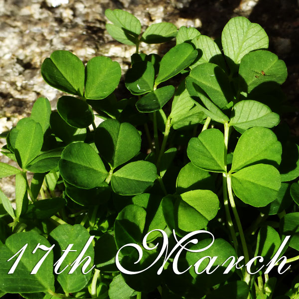 Gospel Reflection for Saint Patrick's Day – March 17th 2014