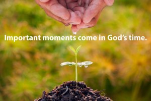 Mustard-seed-parable