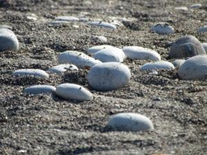 stones-382147